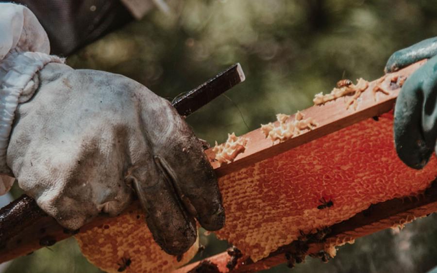 20.000 especies de abejas